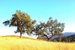 ventura-county-tree-service-32