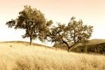 ventura-county-tree-service-33