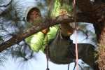 ventura-county-tree-service-tree-trimming-service-11