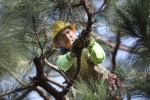 ventura-county-tree-service-tree-trimming-service-16