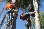 ventura-county-tree-service-tree-trimming-service-2