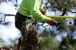 ventura-county-tree-service-tree-trimming-service-21