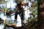 ventura-county-tree-service-tree-trimming-service-22