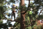 ventura-county-tree-service-tree-trimming-service-23