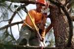 ventura-county-tree-service-tree-trimming-service-24
