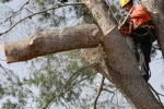 ventura-county-tree-service-tree-trimming-service-29