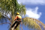 ventura-county-tree-service-tree-trimming-service-3