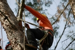 ventura-county-tree-service-tree-trimming-service-30