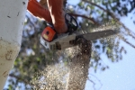 ventura-county-tree-service-tree-trimming-service-32