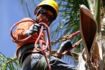 ventura-county-tree-service-tree-trimming-service-35