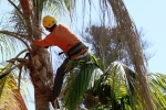 ventura-county-tree-service-tree-trimming-service-37