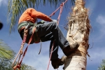 ventura-county-tree-service-tree-trimming-service-39