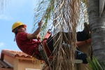 ventura-county-tree-service-tree-trimming-service-41