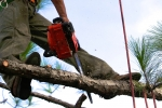 ventura-county-tree-service-tree-trimming-service-6