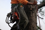 ventura-county-tree-service-tree-trimming-service-7