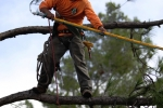 ventura-county-tree-service-tree-trimming-service-8