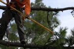 ventura-county-tree-service-tree-trimming-service-9