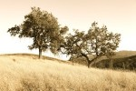 Trees need TLC in this drought