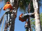 California's Thriving Illegal Underground Economy