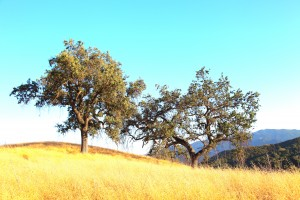 Ventura County Tree Service -  (32)