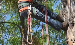 Ventura County Tree Service - Tree Trimming Service (1)