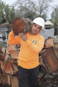 Ventura County Tree Service - Tree Trimming Service (25)
