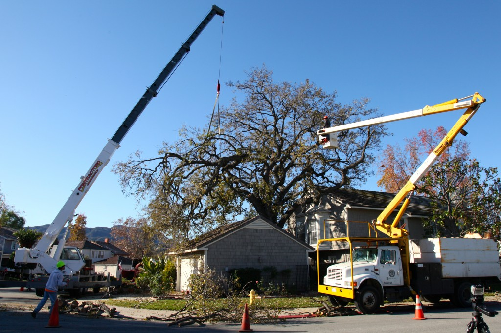 Ventura County Tree Service - Tree Trimming Service (26)