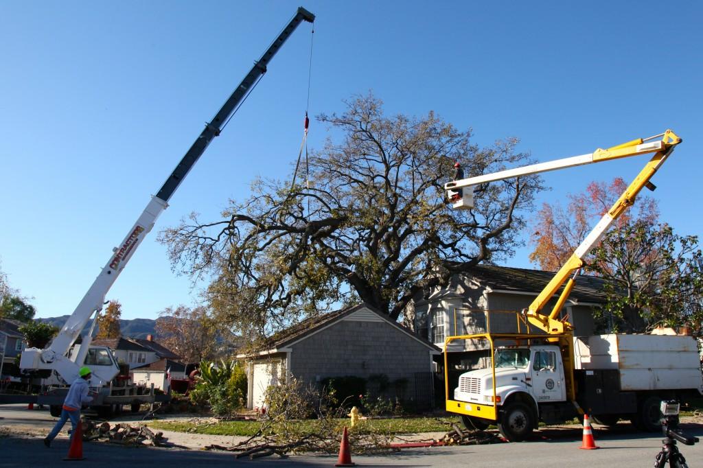 Ventura County Tree Service - Tree Trimming Service (26)