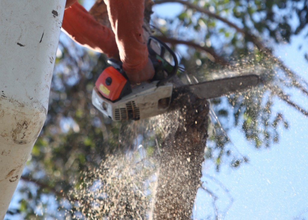 Ventura County Tree Service - Tree Trimming Service (32)