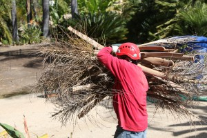 Ventura County Tree Service - Tree Trimming Service (34)