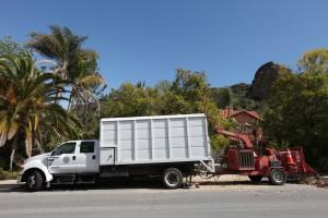 Tree service in Westlake Village