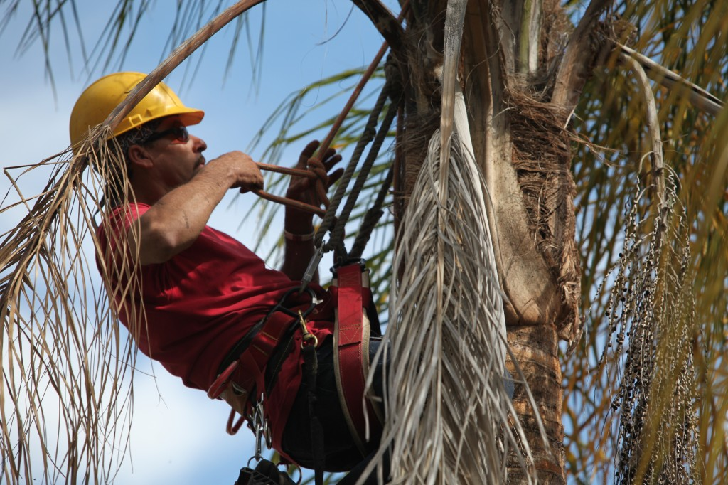 Ventura County Tree Service - Tree Trimming Service (42)