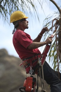 Ventura County Tree Service - Tree Trimming Service (43)