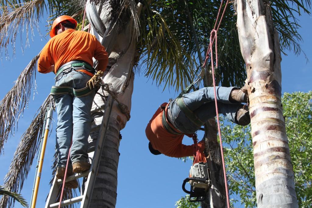 Ventura County Tree Service - Tree Trimming Service (44)